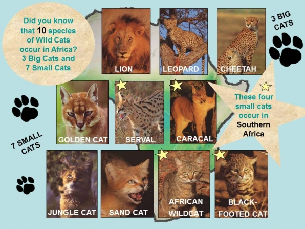 Cats For Africa